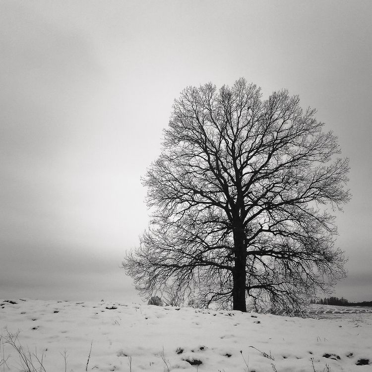 tree, field, dark, darksoul, lithuania - beheroght | ello