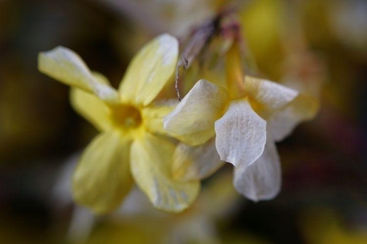 Mother tongue - flower, photography - marcushammerschmitt | ello