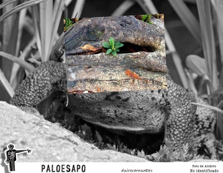 PaloeSapo - photography, conceptual - dairocervantes | ello