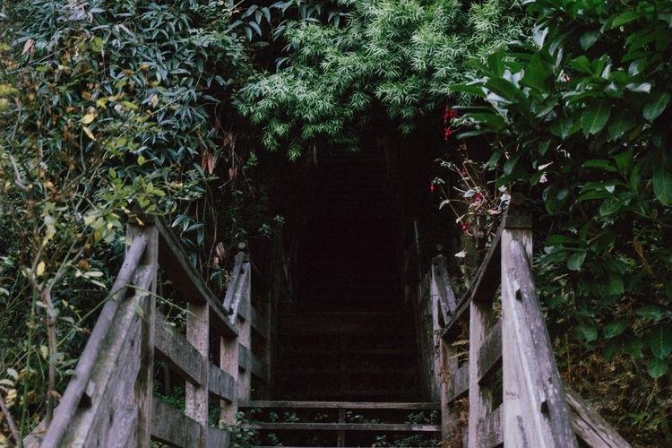 Filbert Steps - sanfrancisco - talesofducky | ello