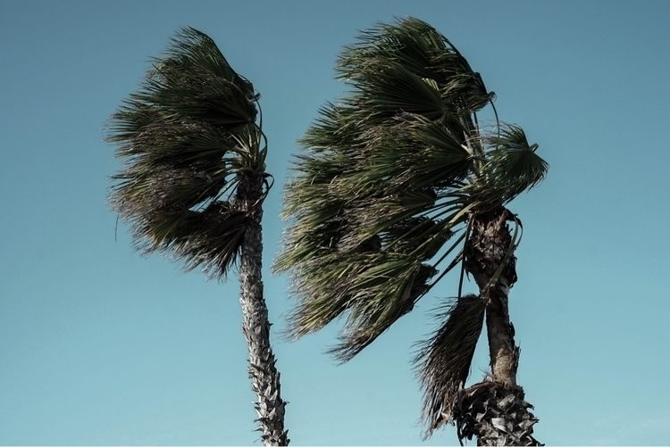 Palms - Aruba, plamtrees, plants - courtneylefebre | ello