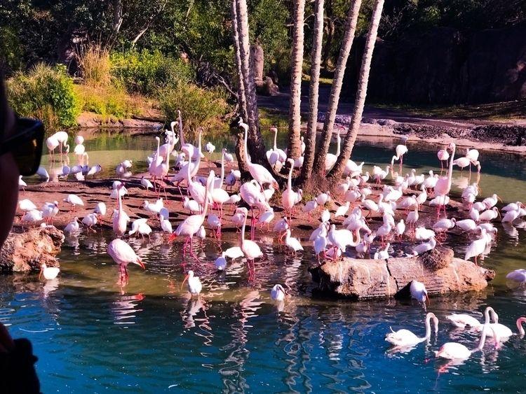 Flamingos - wabearultra | ello
