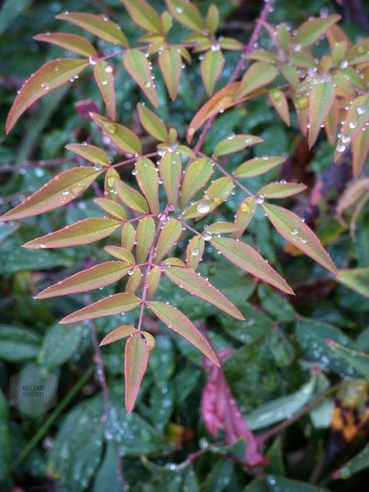 rain, raindrops, naturalcolors - melanierafferty | ello