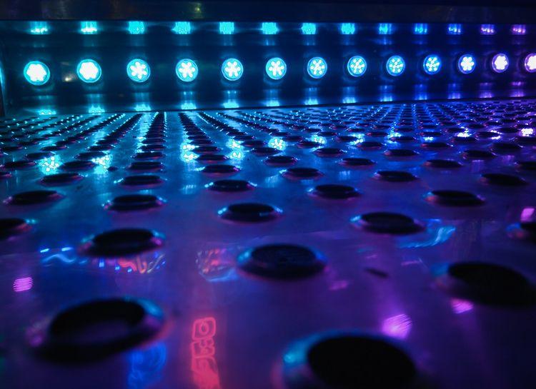 Donnybrook - Blue - night, canon700D - cristinamolinagerboles   ello