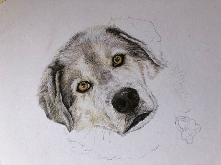 Branching world pet portraits,  - theetchingscollection   ello
