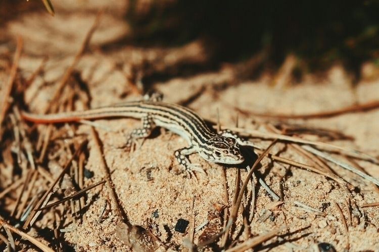 photography, canon, nature, lizard - monicaponzo | ello
