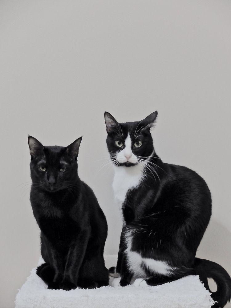 Black Cats Tower Dart Cat Bruce - brandietan | ello