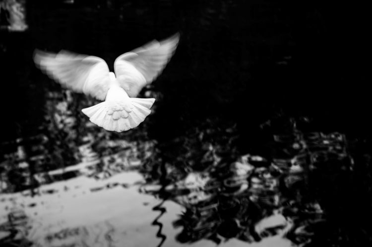 White wings - fineart, blackandwhite - ayoxe | ello
