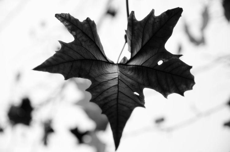Odesa - photography, blackandwhite - ayoxe   ello