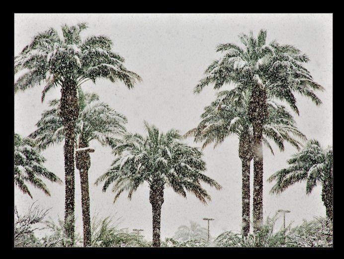 Snowy Tropics Death storm uproo - pasitheaanimalibera | ello