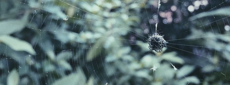 Bad Wires - andystott, spiderweb - exet | ello