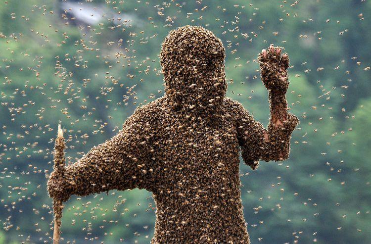 Raging Bees wrong queens dividi - pasitheaanimalibera | ello