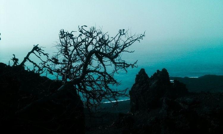 En una casa junto al mar - sea, tree - claveriamiguel | ello
