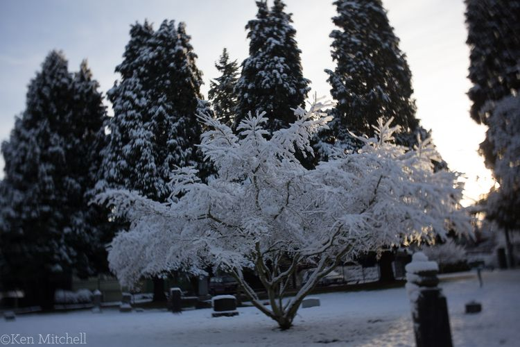 graveyards snow morning light - creative-effects - kenmitchell   ello