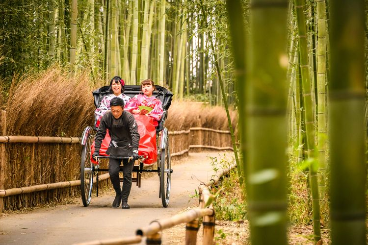 Bamboo Grave Kyoto, Japan - Feb - keithmcinnes | ello