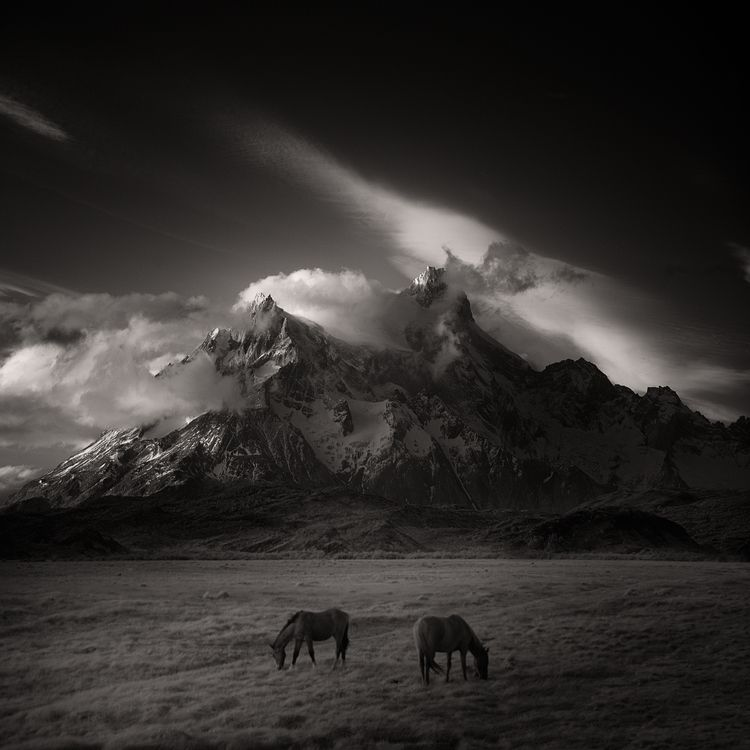 > horses - infrared, patagonia - andyleeuk | ello