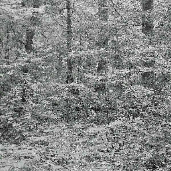 DEEP FOREST Photography Prints - martinarall | ello
