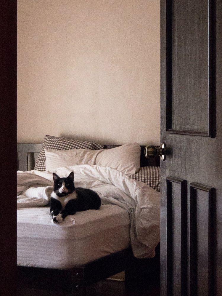 room brown Bruce Cat Black - brandietan | ello