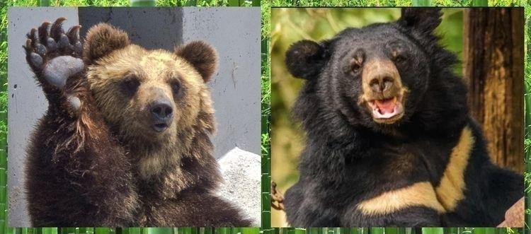 species bears native Korean pen - ccruzme | ello