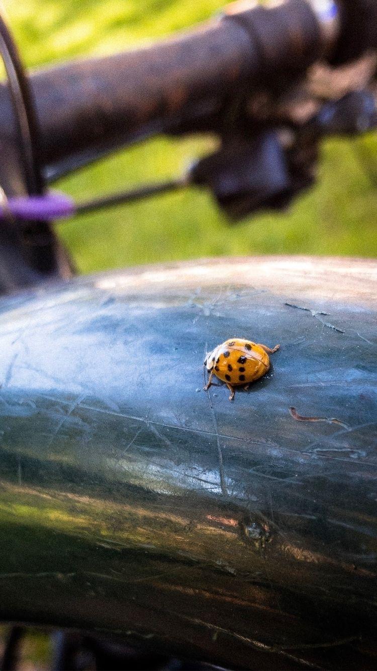 guy bike - iphone, ladybug, charlotte - underflow   ello