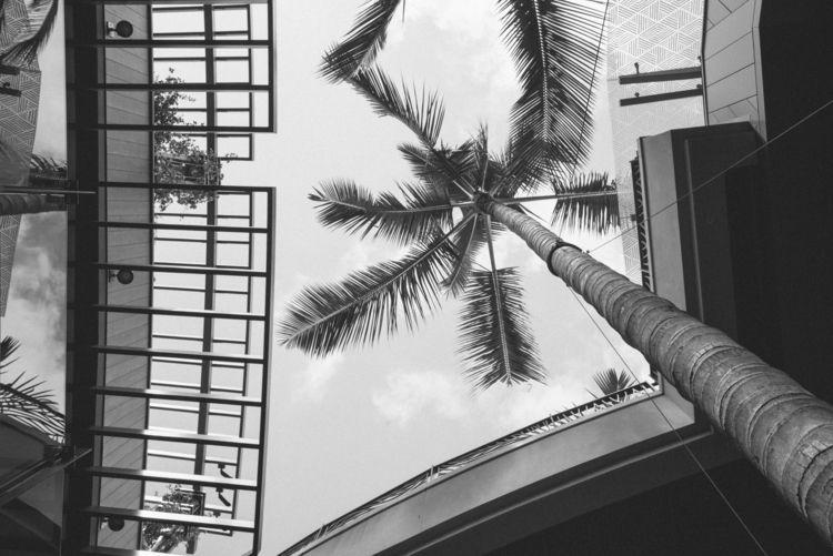 frame palms - bw, aeomlifestyle - aeomlifestyle | ello