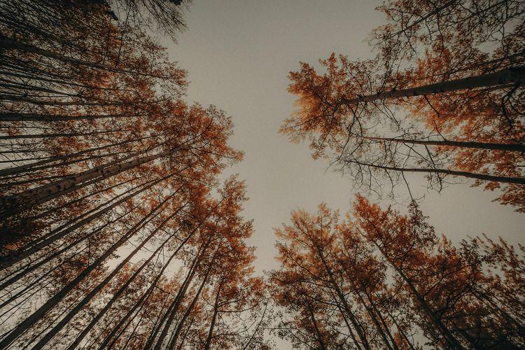 fall aspens - colorado, lookslikefilm - mackenziepackham | ello