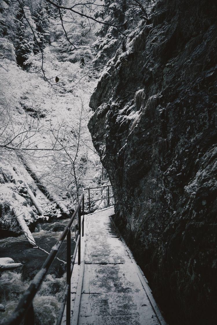 blackforest, photography, forest - pixelmaniac | ello