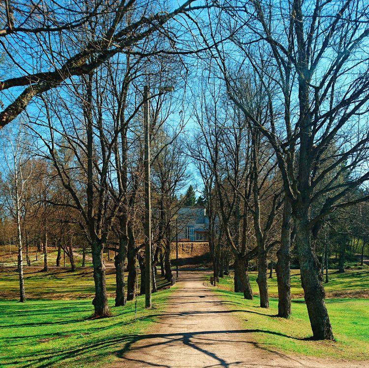 alley, path, trees - themoonlitroad | ello