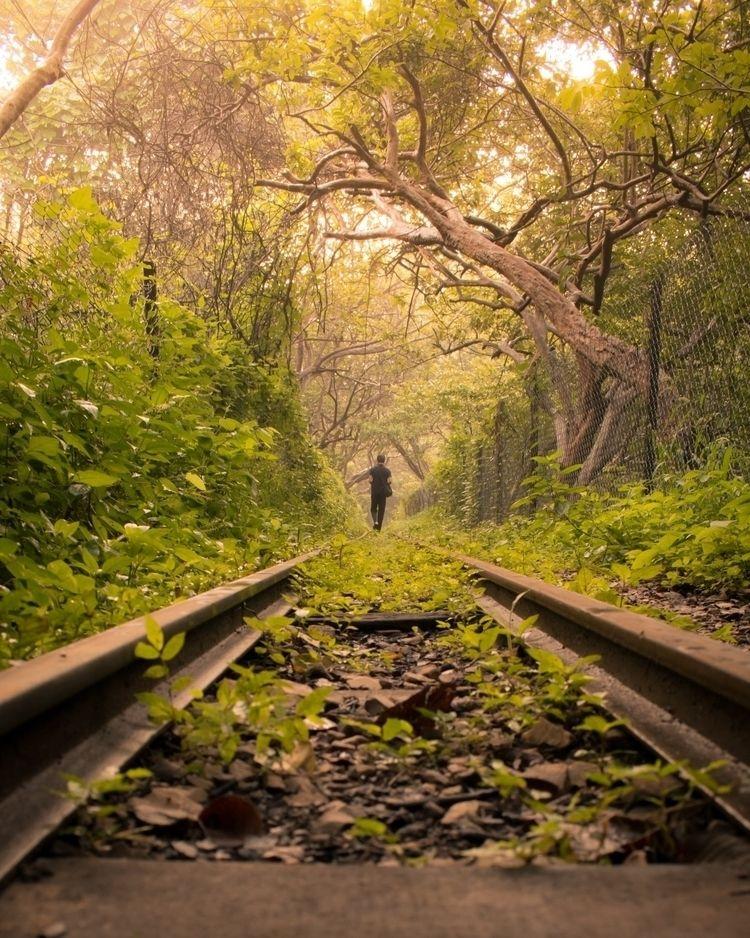 wild.  - photography, adventure - divyeshjain   ello