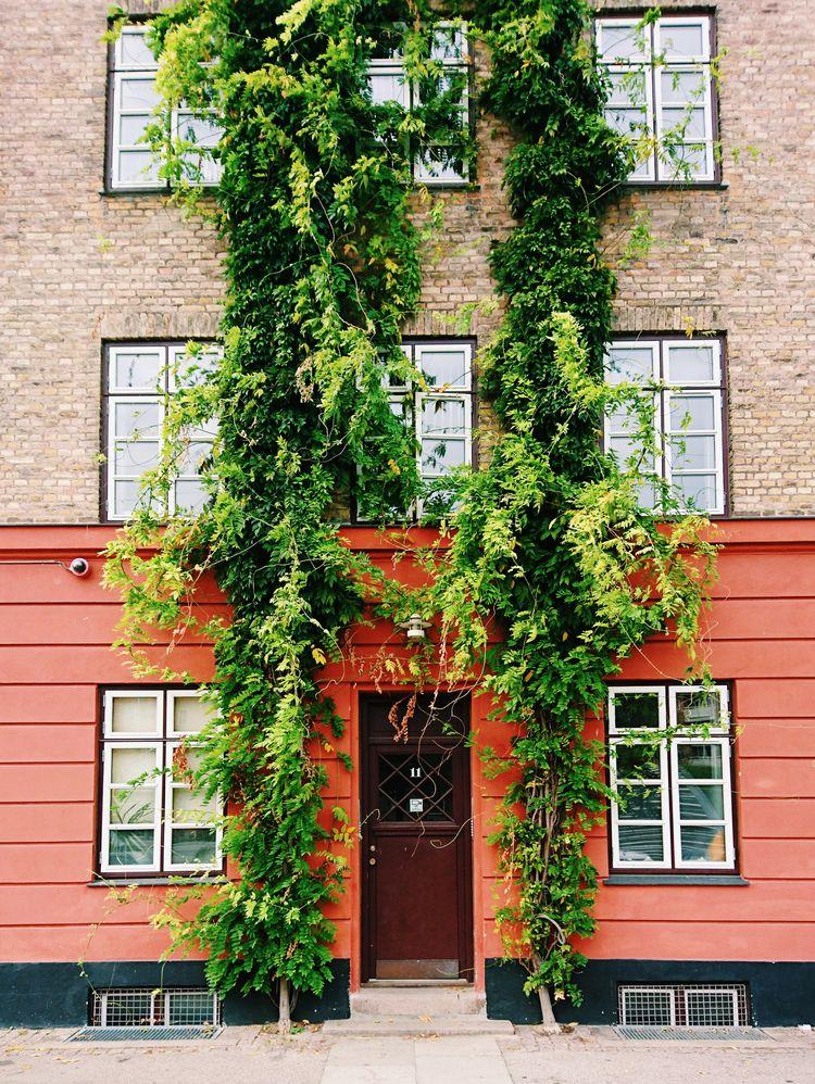 door, ivy - themoonlitroad | ello