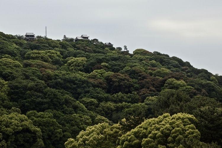 Burg Matsuyama Ehime - greens, fullscreen - hannesb | ello
