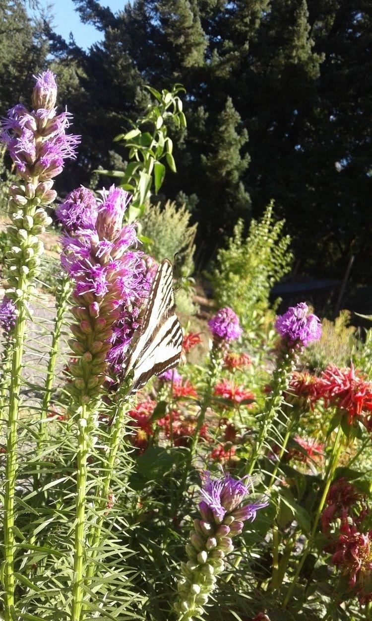 Swallowtail butterfly work abou - carleigh_m | ello