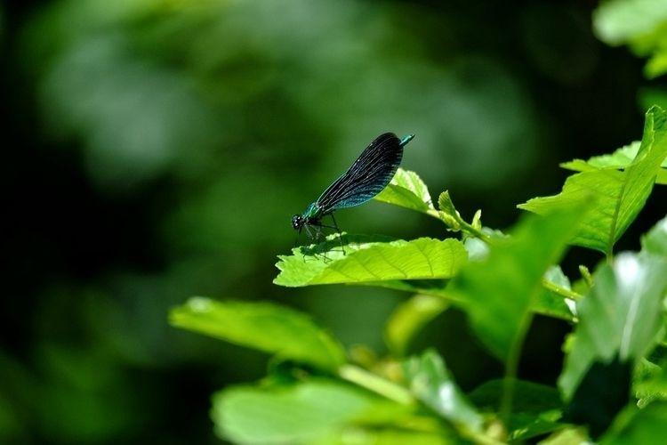 Dragonfly - dragonfly, wildlifephotography - dsandwell | ello