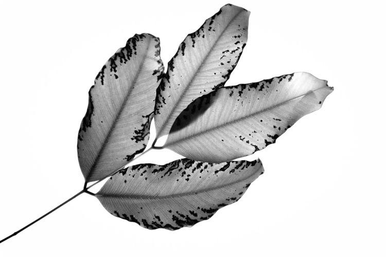 Branches Leaves, 2016, 1 • imag - talpazfridman | ello
