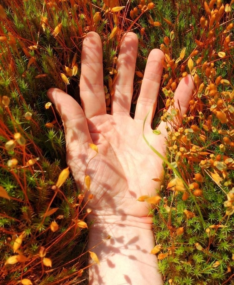 RICH GREEN MOSS stretched hand  - johnhopper | ello