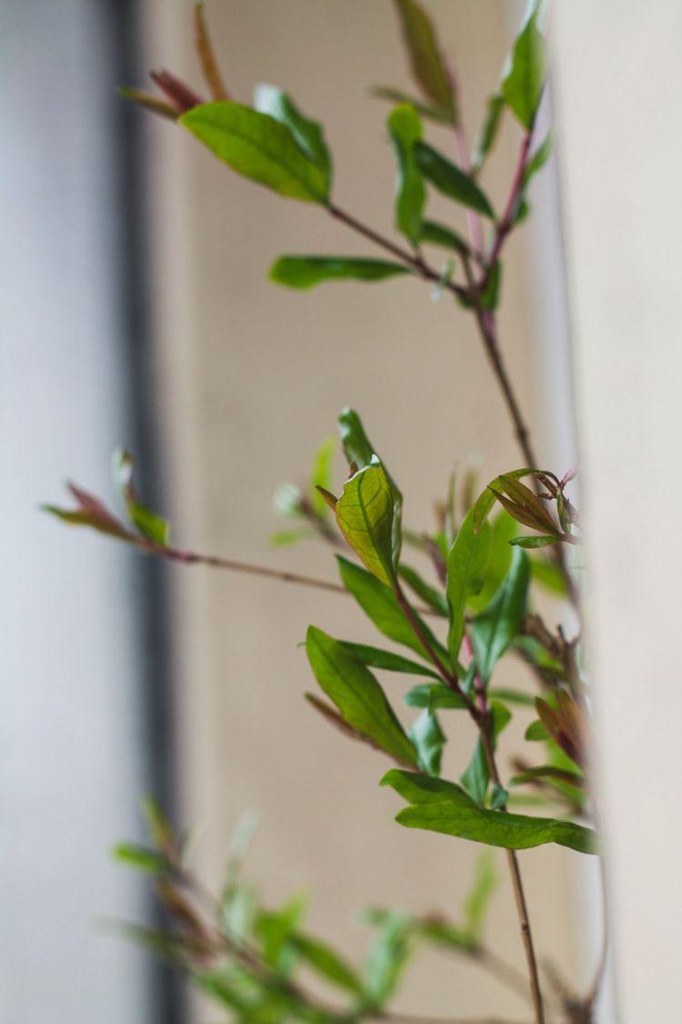 Bonsai - photography, bonsaitree - albxc   ello