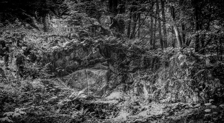 jungle - nature, naturephotography - klausheeskens | ello
