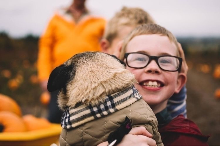 Pure happiness - pug, pumpkins, portrait - andy_nichols_ | ello