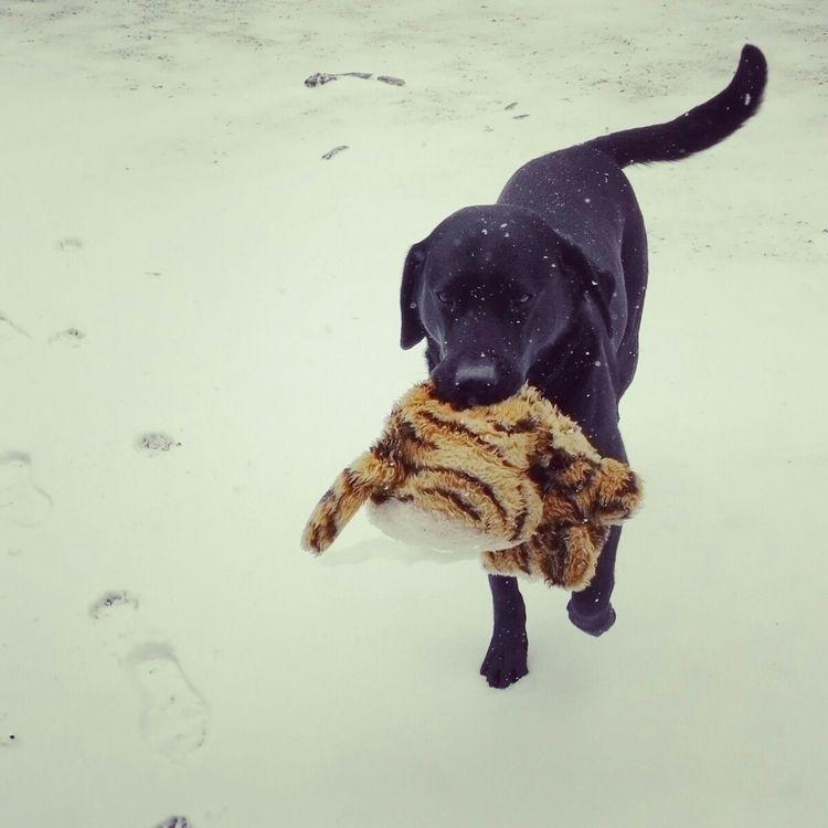 Simmy carries tiger warmth - dog - estelleclarke | ello
