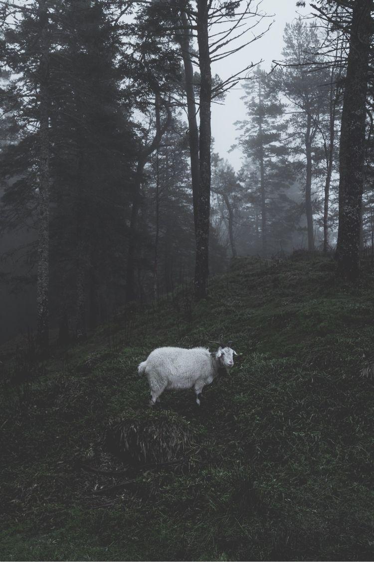 kid live countryside. goat home - danmagatti | ello
