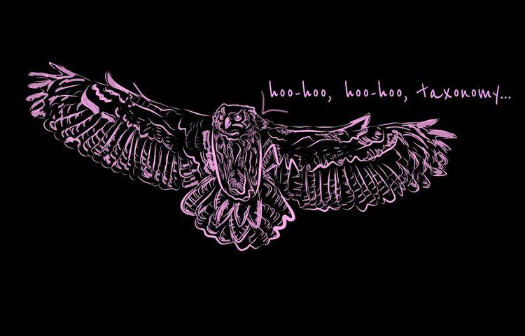 Taxonomy Owl - migulios | ello