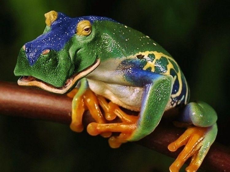 Frogs, Ducks, Thoughts(PMCCP FO - pasitheaanimalibera | ello