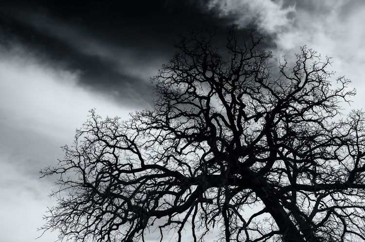 Crackle branches radiate sky DF - mattgharvey | ello
