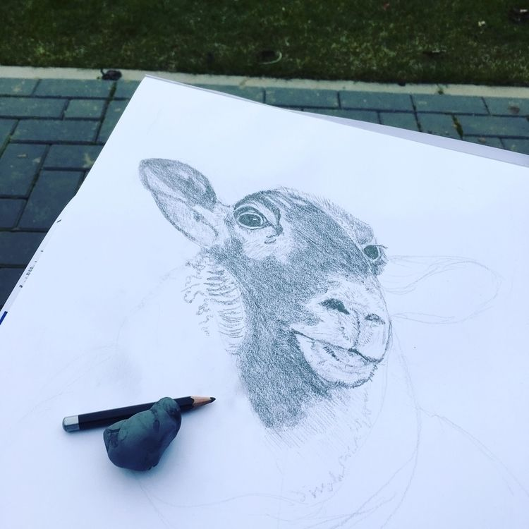 Drawing - sheep, drawing, illustration - bsofies | ello