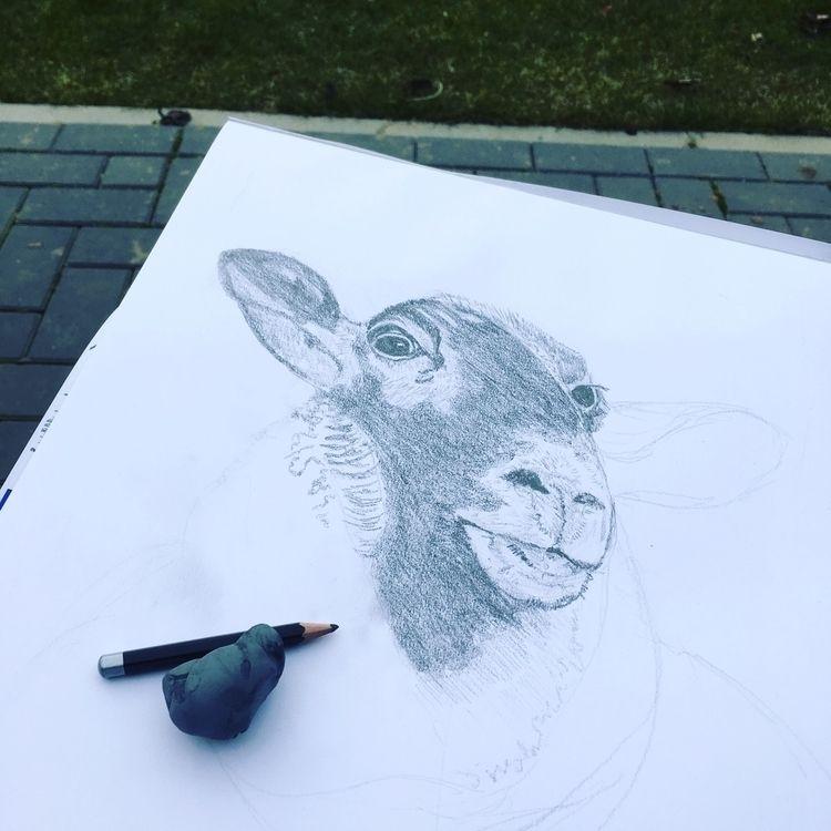 Drawing - sheep, drawing, illustration - bsofies | ello