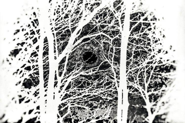 Trees, 3/4/18 - scalzi | ello