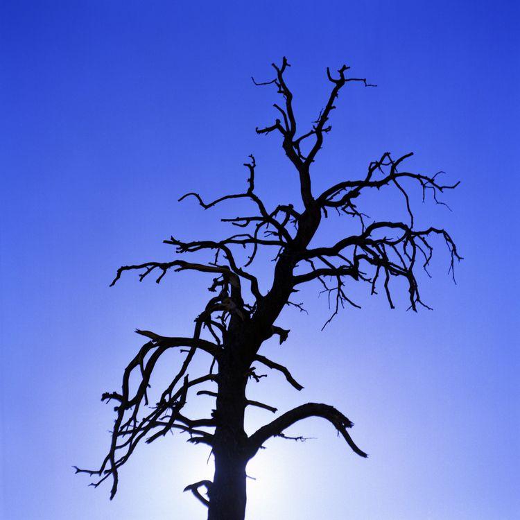 Branches Joshua Tree National P - danielregner | ello