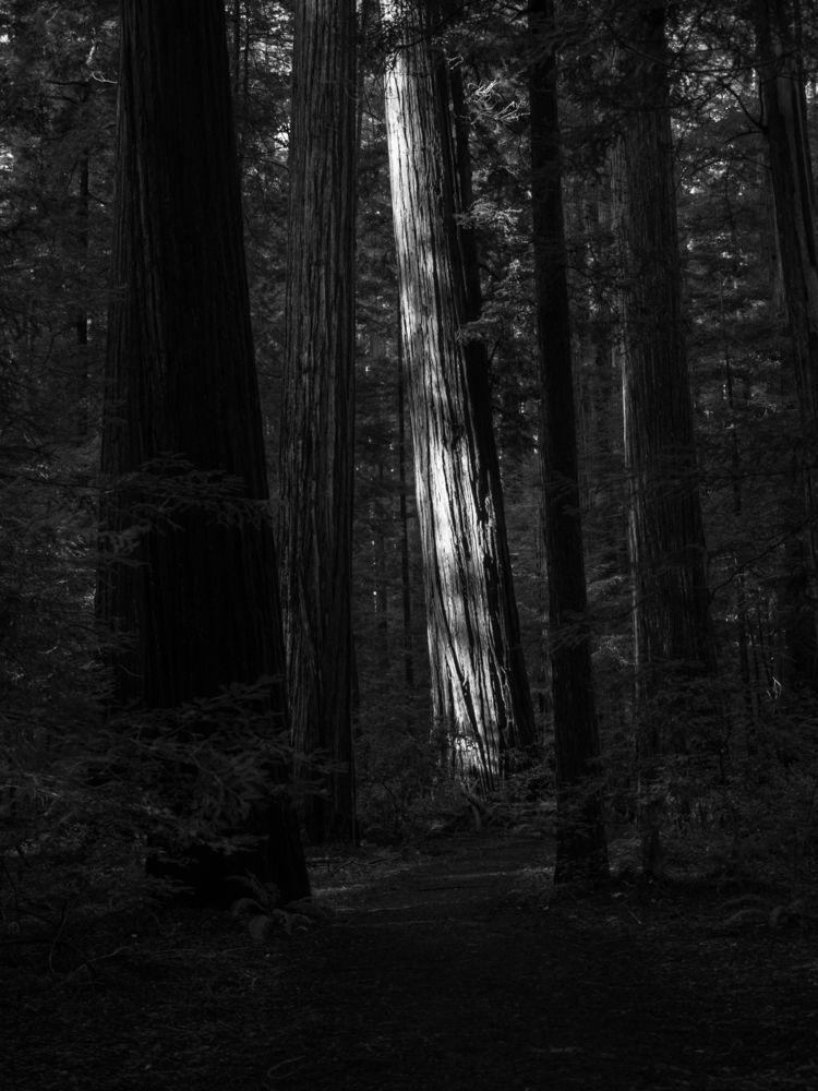 forests Humboldt Redwoods State - aaronvizzini | ello