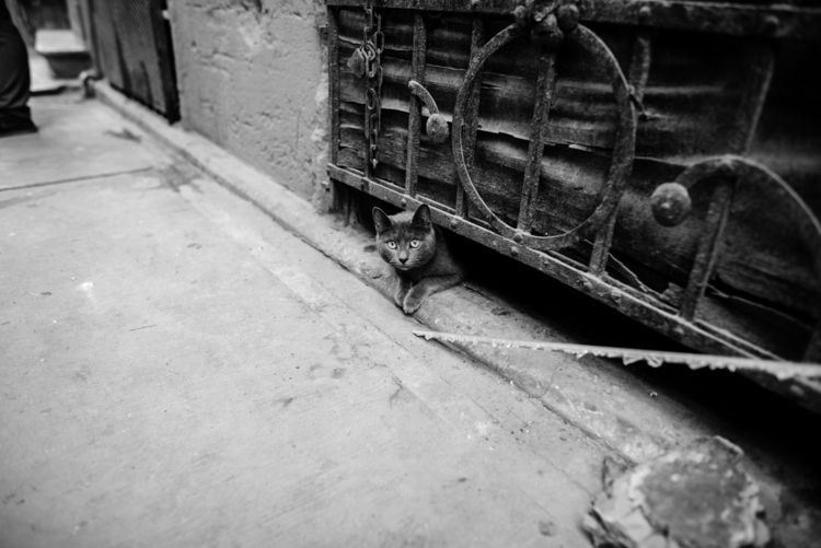 Stray cat, Istanbul, Feb/21/201 - peterrunkewitz | ello