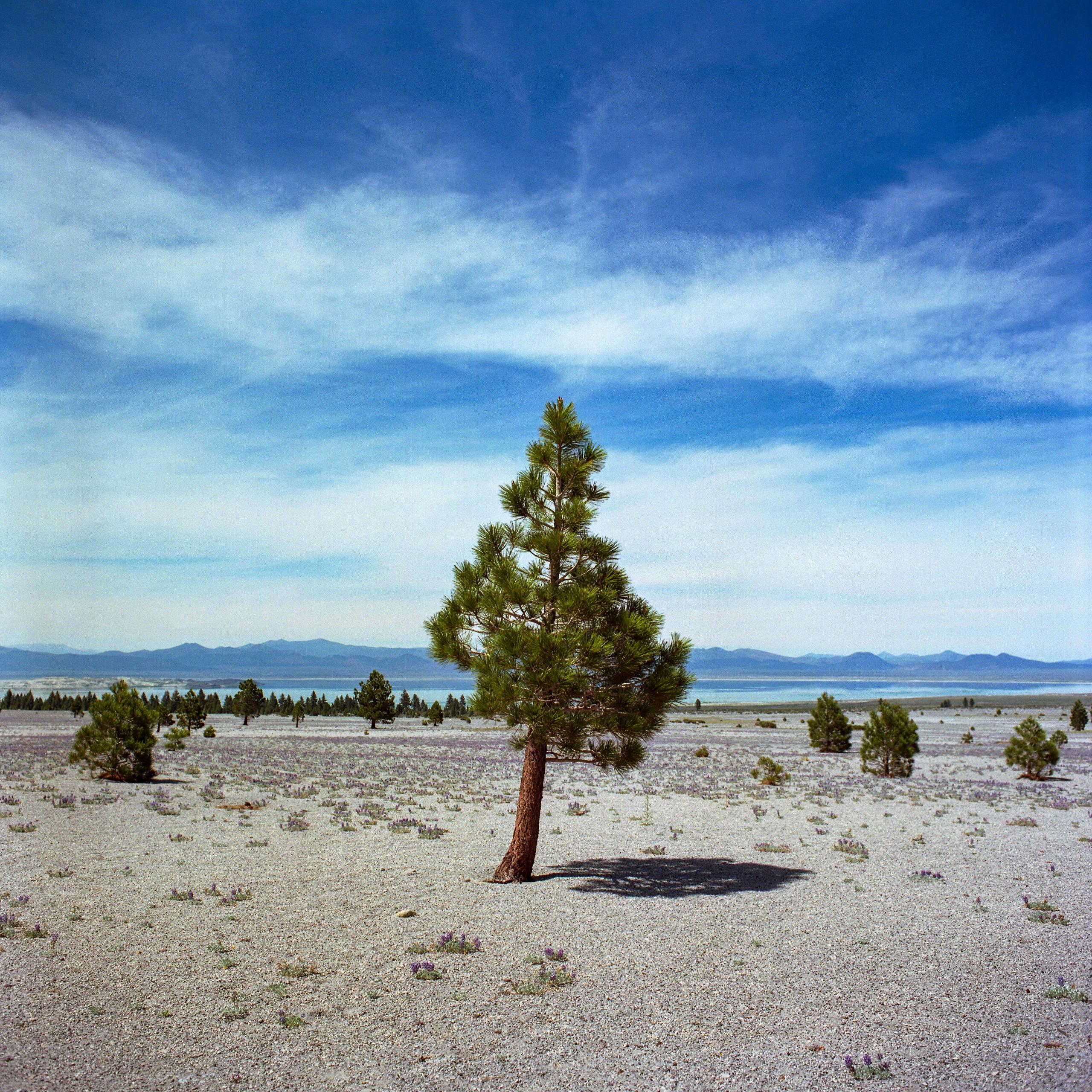 Mono Lake Mamiya C330 Kodak Ekt - danielregner | ello